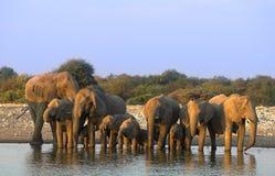 elefantgrupp Royaltyfri Fotografi