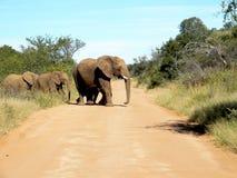 Elefantgrupp arkivbild