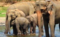 Elefantgrupp i floden Royaltyfri Fotografi