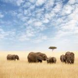Elefantgruppe in der Wiese des Masais Mara lizenzfreies stockfoto