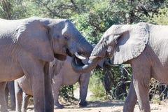 Elefanthälsningar Royaltyfri Fotografi