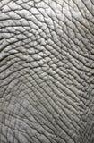 Elefanthaut Stockbild