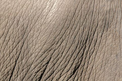 Elefanthaut Stockfoto