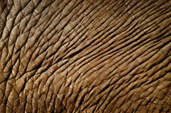 Elefanthaut Lizenzfreies Stockbild