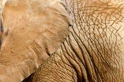 Elefanthaut Lizenzfreie Stockfotos