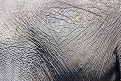 Elefanthaut Stockfotografie