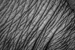 Elefanthautnahaufnahme Stockfotos