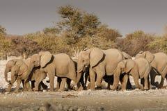 Elefantherde, die zu einem waterhole marschiert Stockfotos