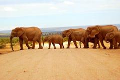 Elefantherden-Überfahrtstraße lizenzfreie stockbilder