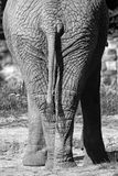 Elefanthinterteile Lizenzfreies Stockbild