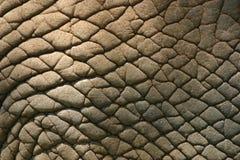 elefanthud Arkivbild