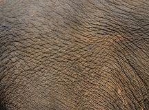 Elefanthud Arkivfoton