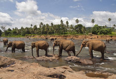 Elefanti Stock Image