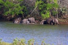 Elefanti Immagine Stock Libera da Diritti