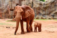 Elefanti africani 2 Immagini Stock Libere da Diritti