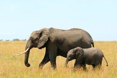 Elefanti africani madre e bambino Fotografia Stock Libera da Diritti