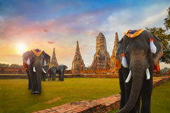 Elefanti al tempio di Wat Chaiwatthanaram nel parco storico di Ayuthaya, Tailandia Immagini Stock
