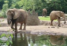Elefanti allo zoo immagine stock