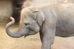 Elefanti asiatici Fotografie Stock