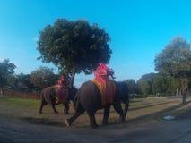 Elefanti a Ayutthaya Fotografie Stock Libere da Diritti
