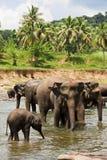 Elefanti che bagnano Fotografia Stock Libera da Diritti
