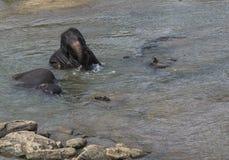 Elefanti che bagnano Fotografia Stock