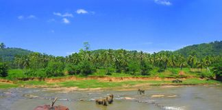 Elefanti che bagnano nello Sri Lanka all'orfanotrofio dell'elefante Immagini Stock