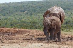 Elefanti che stanno insieme nel mucchio Fotografie Stock