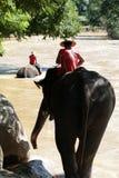 Elefanti che vanno giù! Fotografia Stock