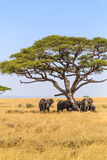 Elefanti in cratere di Ngorongoro in Tanzania Immagine Stock Libera da Diritti