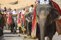 Elefanti decorati in Jaleb Chowk in Amber Fort a Jaipur, Indi Fotografia Stock Libera da Diritti