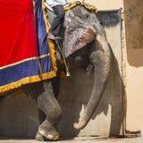 Elefanti decorati in Jaleb Chowk in Amber Fort a Jaipur, Indi Immagini Stock