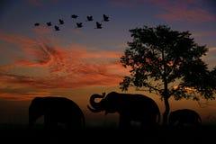 Elefanti degli uccelli al tramonto Fotografia Stock Libera da Diritti