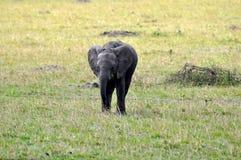 Elefanti dei masai Mara 4 Fotografia Stock Libera da Diritti