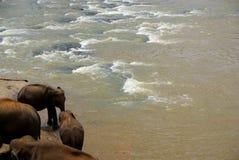 Elefanti del fiume Fotografie Stock