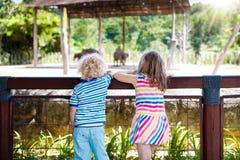 Elefanti dell'orologio dei bambini allo zoo Bambini ed animali Immagini Stock