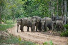 Elefanti della foresta Immagini Stock Libere da Diritti