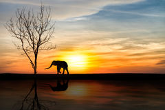 Elefanti della siluetta sopra il tramonto Immagini Stock
