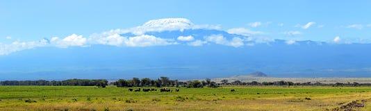 Elefanti di Amboseli Immagine Stock