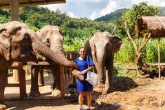 Elefanti di carezza tre della ragazza al santuario in Chiang Mai Thailand fotografia stock