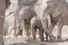 Elefanti di colore Fotografie Stock Libere da Diritti