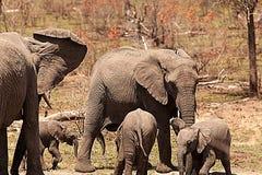 Elefanti e foro di acqua II Fotografia Stock Libera da Diritti