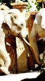 Elefanti indiani Fotografie Stock
