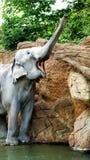 Elefanti indiani Fotografia Stock