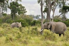 Elefanti in Masai Mara Immagine Stock