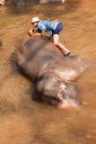 Elefanti nel campo dell'elefante di Maesa, Tailandia Fotografia Stock Libera da Diritti