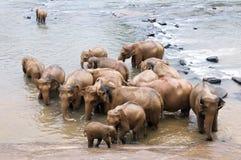 Elefanti nel fiume Fotografie Stock Libere da Diritti