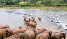 Elefanti nel fiume Fotografia Stock Libera da Diritti