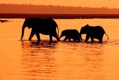 Elefanti nel lago Fotografie Stock Libere da Diritti