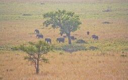 Elefanti nel selvaggio Fotografia Stock Libera da Diritti
